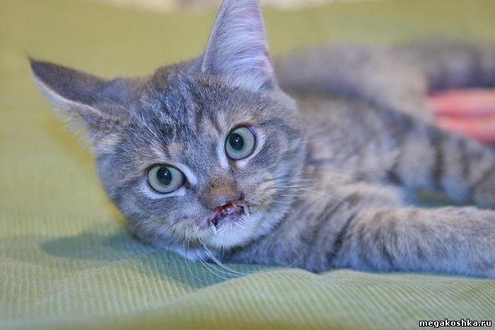Убили котенка